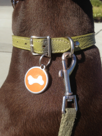 The Best Way To Attach Dog Tags Thriving Canine