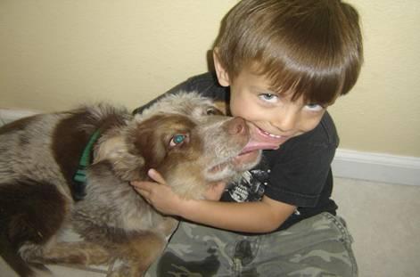 dog child safety