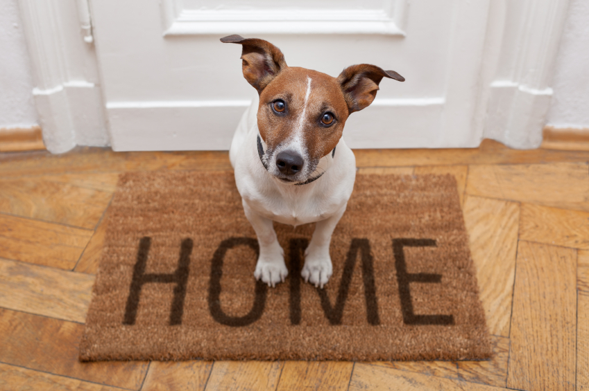 Image result for pets inside house